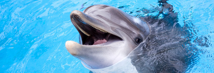 Rencontrer des animaux marins